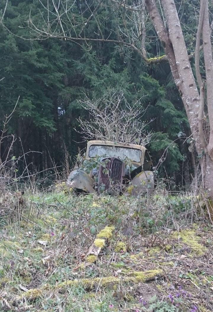 auto 1 (2)